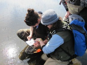 Aquatic ecologists taking notes on the water's edge